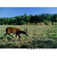 trail-camera-copy-of-fototrappola-trail-camera-3g-hd-1080p_image_6