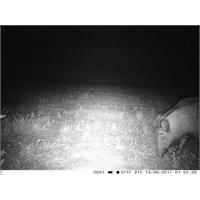 trail-camera-copy-of-fototrappola-trail-camera-3g-hd-1080p_image_7