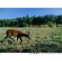trail-camera-copy-of-fototrappola-trail-camera-3g-hd-1080p_image_6