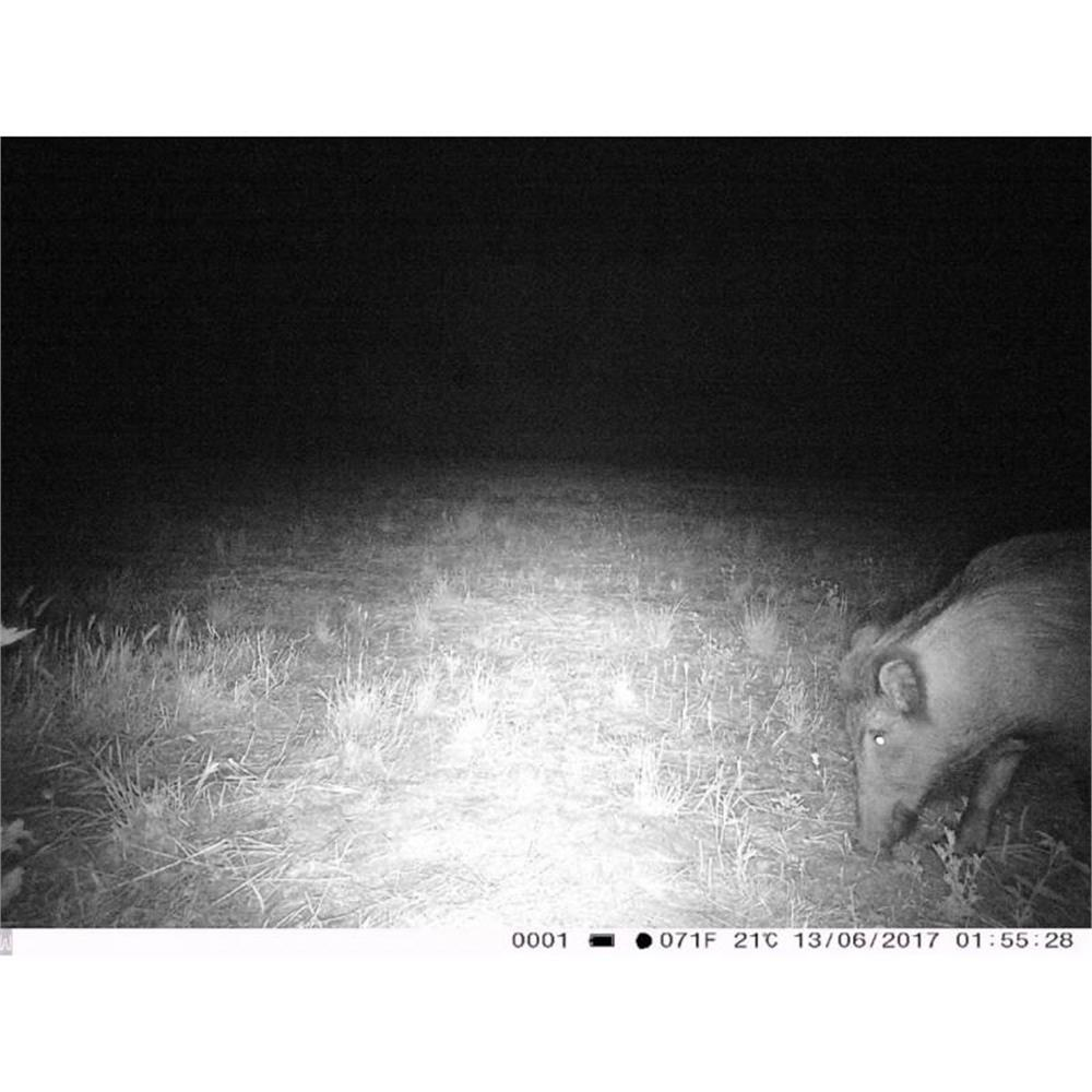 trail-camera-fototrappola-trail-camera-3g-hd-1080p_medium_image_6