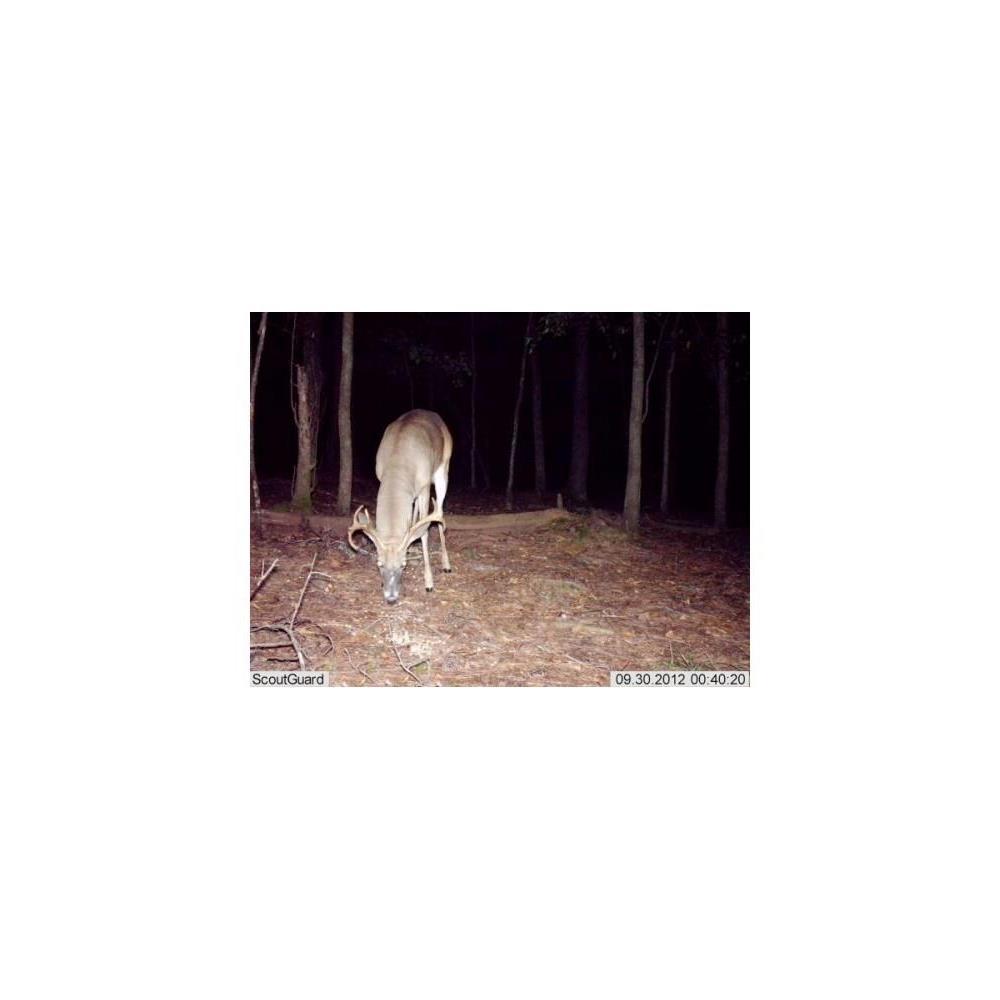 scoutguard-fototrappola-scout-guard-sg562-c-hd-a-colori-anche-di-notte_medium_image_3